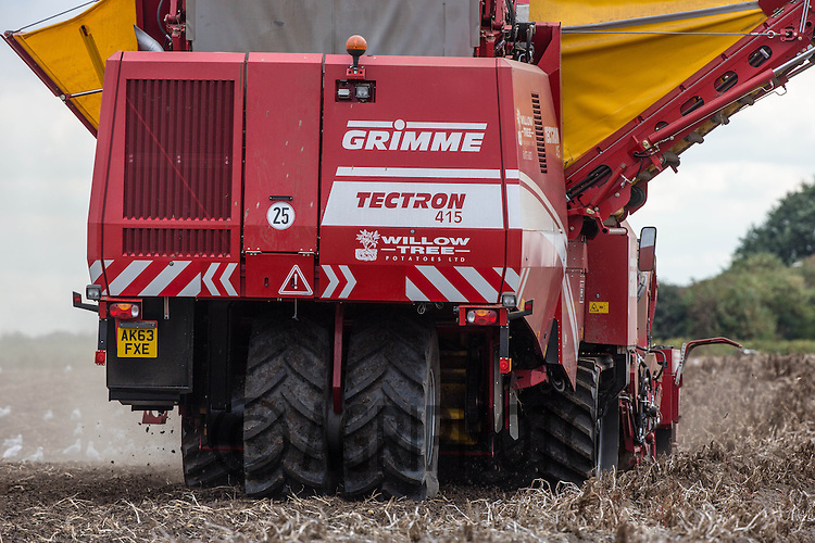 Grimme Tectron 415 self propelled potato harvester lifting potatoes in the Lincolnshire fens<br /> Picture Tim Scrivener 07850 303986