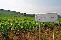 Sign in the vineyard, Gevrey Chambertin, Bourgogne