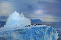 ANTARCTICA - DRAKE PASSAGE<br /> Crashing surf and first huge icebergs with penguin colonies nearby the South Shetland Islands<br /> <br /> Full size: 69,1 MB
