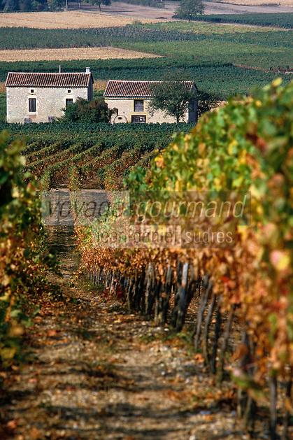 Europe/France/Midi-Pyrénées/46/Lot/Vallée du Lot/Vignoble de Cahors/Env Puy-l'Evèque: Le vignoble