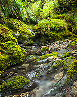 Forest stream with green moss covered rocks, Egmont National Park, North Island, New Zealand, NZ