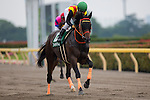 TOKYO,JAPAN-JUNE 19: Gold Dream,ridden by Yuga Kawada,is preparing for the Unicorn Stakes at Tokyo Racecourse on June 19,2016 in Fuchu,Tokyo,Japan (Photo by Kaz Ishida/Eclipse Sportswire/Getty Images)