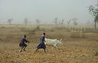 "- shepherds in the ""brousse""....- pastori nella ""brousse"""