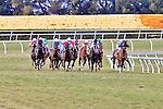 20 February 2010: Wasted Tears with Carmelio Velasquez wint the Honey Fox Stakes at Gulfstream Park in Hallandale Beach, FL