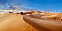 Camel rides on the Sahara sand dunes of erg Chebbi, Morocco, Africa