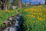 Wildflowers growing along subalpine stream in Indian Peaks Wilderness, CO