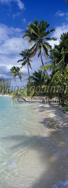 Iles Bahamas /Ile d'Andros/South Andros: la plage et les palmiers de l'Eco-Lodge-Tiamo Resorts - Vue sur l'océan Atlantique