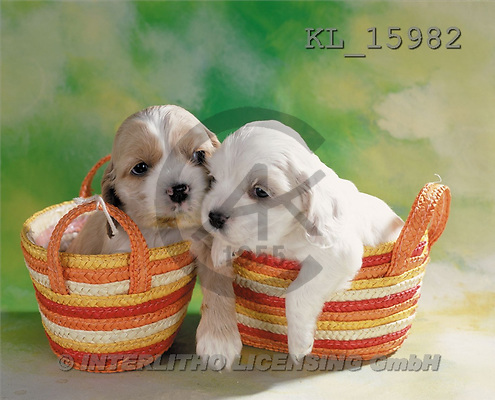 Interlitho, Alberto, ANIMALS, dogs, photos, 2 puppies in bags(KL15982,#A#) Hunde, perros