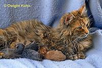 SH30-010z  Cat - mother nursing new born kittens
