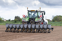 12-5-2021 Drilling maize in the Lincolnshire fens <br /> ©Tim Scrivener Photographer 07850 303986<br />      ....Covering Agriculture In The UK....
