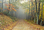 Road Through Autumn Forest, Bald Eagle State Forest, Pennsylvania