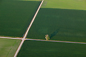 Farmland abstract of lonely tree