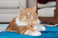 2014-07-20_CATSnaps_Anne Poley-Mickey