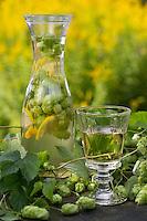 Hopfen-Weißwein, Hopfenwein, Heilwein, Wein mit Hopfen. Hopfen, Humulus lupulus, Common Hop. Heilschnaps, Heilschnäpse, Kräuterschnaps, Kräuterschnäpse, Likör, Liköre, Kräuterlikör, Magenbitter, Wildfruchtschnaps, Fruchtschnaps, Früchte, Wildfrüchte einlegen, angesetzt. bitters, schnapps, liquor, cordial.