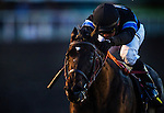 Shared Belief ridden by Corey Nakatani wins the Cash Call Futurity on December 14, 2013 at Betfair Hollywood Park in Inglewood, California .(Alex Evers/ Eclipse Sportswire)
