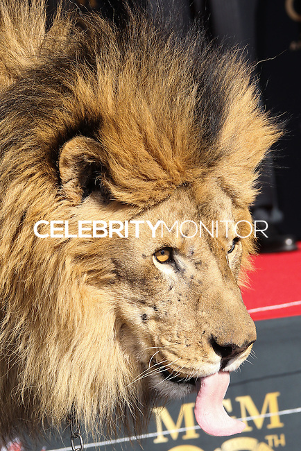 HOLLYWOOD, CA - JANUARY 22: Leo the Lion at the Metro-Goldwyn-Mayer 90th Anniversary Celebration held at the TCL Chinese Theatre on January 22, 2014 in Hollywood, California. (Photo by Xavier Collin/Celebrity Monitor)