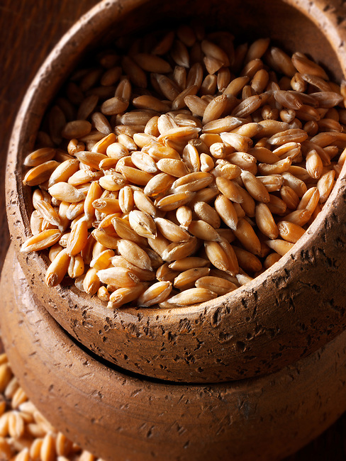 Organic Spelt Grains - stock Photos