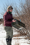 New Hampshire Fish and Game Biological Technician, Brett Ferry prepares rabbit trap before placing under classic New England cottontail rabbit new forest habitat inside the Great Bay National Wildlife Refuge, vertical.