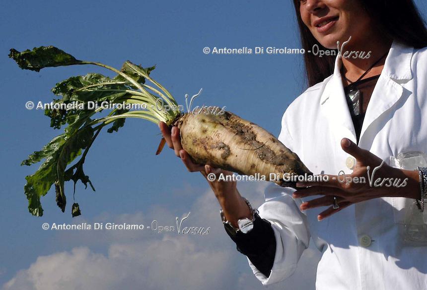 Modificazione genetica su barbabietole da zucchero. Genetic modification on sugar beet ...