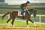 DUBAI,UNITED ARAB EMIRATES-MARCH 30: Gunnevera,trained by Antonio Sano,exercises in preparation for the Dubai World Cup at Meydan Racecourse on March 30,2018 in Dubai,United Arab Emirates (Photo by Kaz Ishida/Eclipse Sportswire/Getty Images)