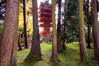 Japanese Tea Garden in Golden Gate Park, San Francisco, California. View of Buddhist Pagoda through trees.