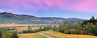 Sunset with fall colored vineyards at Castello di Amorosa. Napa Valley, California. Property relased