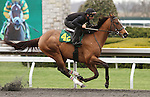 April 03, 2014: Hip 42 Rock Hard Ten - Sparkling Blue consigned by Murray Smith worked 1/8 in 10:3.  Candice Chavez/ESW/CSM