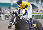 27 March 2009: Heavy favorite Justwhistledixie, with jockey Julien Leparoux in the saddle, wins her fifth straight race in the 39th running of the grade 2 Bonnie Miss Stakes for three year old fillies at Gulfstream Park in Hallandale Beach, Florida.