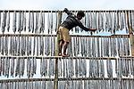 Workers climb structure to hang fish out to dry Sabina Akter