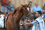 September 19, 2015.  Island Town, one of nine contenders in the $1,000,000 Grade II Pennsylvania Derby, one and 1/8th miles for three-year-olds, at  Parx Racing in Bensalem, PA.  (Joan Fairman Kanes/ESW/CSM)