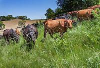 PHS Gabilan Ranch