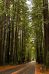 Redwood Forests in Northern California.