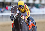 September 26, 2015 : Rock Fall, ridden by Javier Castellano, wins the Vosburgh Stakes on on Turf Classic Day at Belmont Park in Elmont, NY. Scott Serio/ESW/CSM