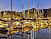 Sailboats at Fern Ridge Reservoir, Oregon.