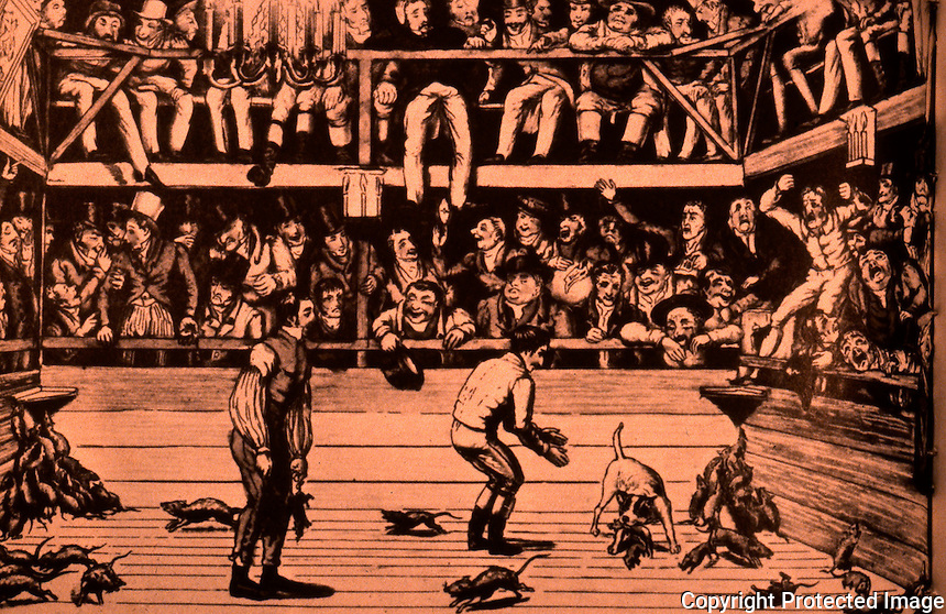 """London: Historical--""""The celebrated dog Billy killing 100 rats at the Westminster Pit"""", 1822. Hibbert, LONDON.  Reference only."""