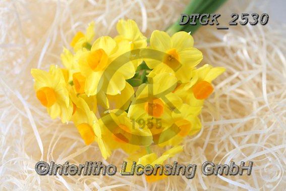 Gisela, FLOWERS, BLUMEN, FLORES, photos+++++,DTGK2530,#f#, EVERYDAY