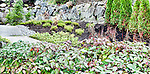 Garden Walk, new plantings in side yard.  Private garden professionally landscaped.
