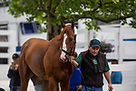BALTIMORE, MD - MAY 16:  Justify with assistant trainer Jimmy Barnes arrives at Pimlico Racecourse on May 16, 2018 in Baltimore, Maryland. (Photo by Alex Evers/Eclipse Sportswire/Getty Images)