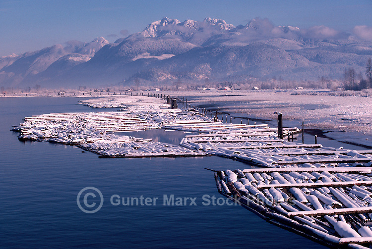 "Log Booms floating in Pitt River, Fraser Valley, BC, British Columbia, Canada - ""Golden Ears""(Coast Mountains) in background"