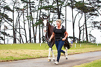 NZL-Donna Edwards-Smith with CHS Ripleys Dream during the First Horse Inspection. 2016 NZL-Puhinui International 3 Day Event. Puhinui Reserve, Auckland. Thursday 8 December. Copyright Photo: Libby Law Photography