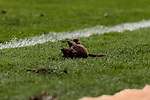 Atletico de Madrid's supporters throw teddy rats during La Liga match between Atletico de Madrid and Real Madrid at Wanda Metropolitano Stadium in Madrid, Spain. February 09, 2019. (ALTERPHOTOS/A. Perez Meca)