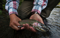 150620-JRE-7981E-0861 Releasing a Russian River rainbow trout caught on a dry fly.