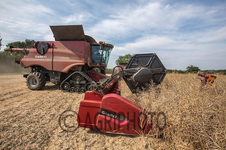 Harvesting oilseed rape in Lincolnshire<br /> Picture Tim Scrivener 07850 303986