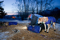 Jessie Royer gets her dogs ready to leave her 24 hour layover as dawn breaks at the Takotna checkpoint at 15 degrees below zero during the 2010 Iditarod