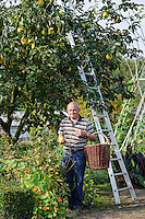 Justin Harvesting Quince