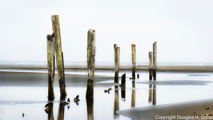Piling stand in Joe Creek on the beach at Pacific Beach State Park, Pacific Beach, Washington, on the Olympic Peninsula