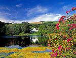 South Africa, near Cape Town, Winelands Stellenbosch: wine growing estate Zevenwacht at Kuilsrivier