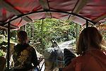 Austria, Styrian Salzkammergut, Goessl at Grundl Lake: trip to Lake Toplitz by coach | Oesterreich, Steyrisches Salzkammergut, Goessl am Grundlsee: mit der Pferdekutsche unterwegs zum Toplitzsee