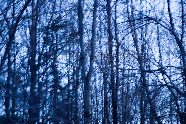 AVAILABLE FOR LICENSING FROM GETTY IMAGES. Please go to www.gettyimages.com and search for image # 132444995.<br /> <br /> Defocused and Blue Tinted View of Bare Trees in a Forest at Dusk during the Winter, Warwick, New York State, USA
