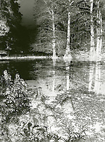 Black and white scene of lake with cypress knees and duckweed
